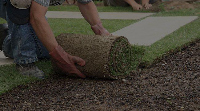 Minneapolis Lawn Care