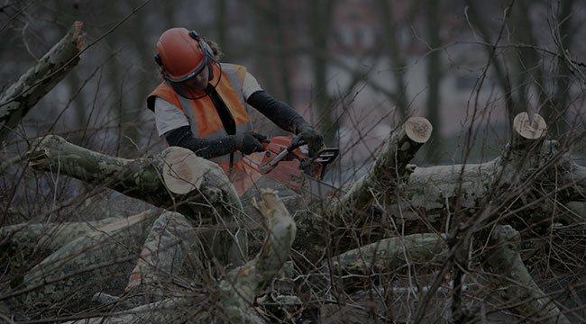 Minneapolis Tree Service