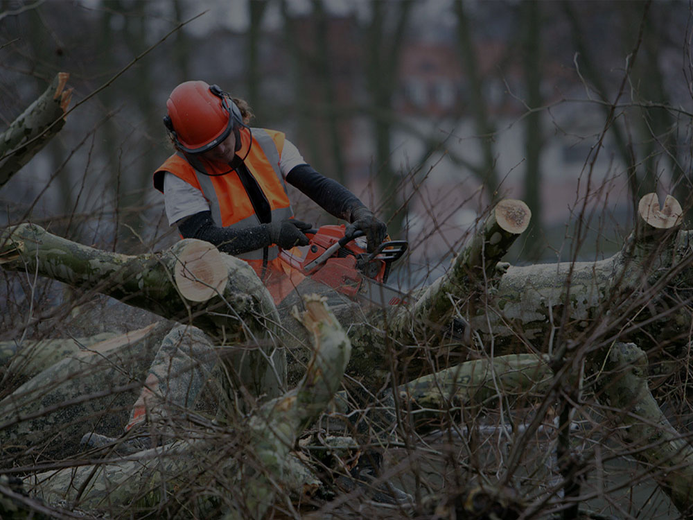 Eagan Tree service